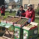 Festa del kiwi